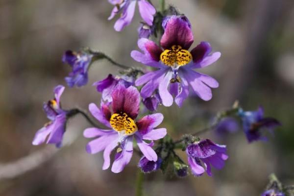 desierto atacama flores primavera