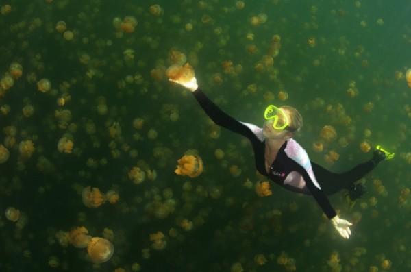 Lago de Medusas, Palau