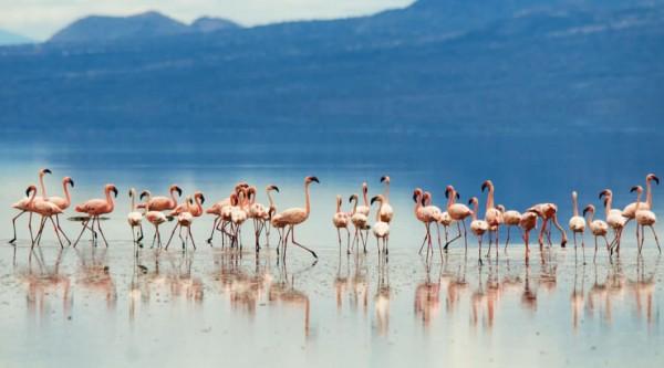 lago rojo natron animales petrificados