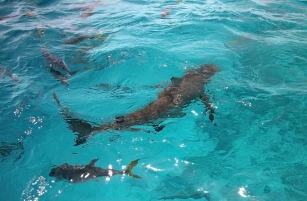 tiburones el gran agujero azul de belice