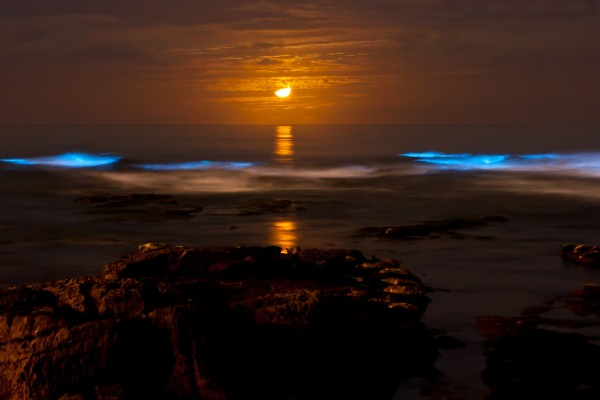 vaadhoo islas maldivas playa que brilla en la oscuridad