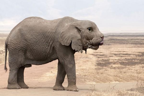 animales hibridos raros