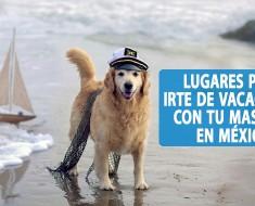 Lugares para irte de vacaciones con tu perro en México