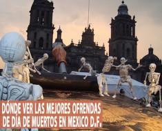 Dónde ver las mejores ofrendas de Día de Muertos en México DF