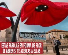 flores farola jerusalen israel