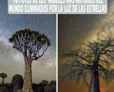 Los árboles más antiguos del mundo iluminados por la luz de las estrellas