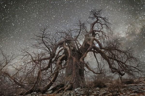 imagenes arboles con cielos con estrellas