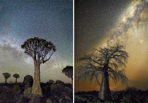 imagenes arboles con cielos estrellados