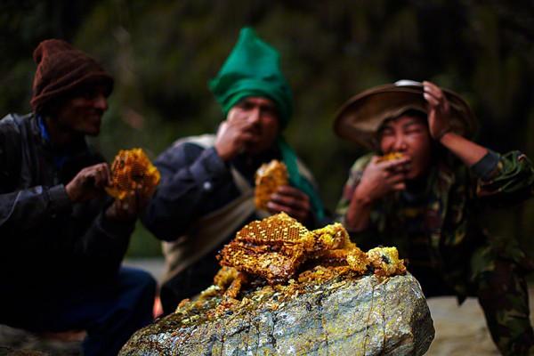 recolectores de miel en himalaya nepal