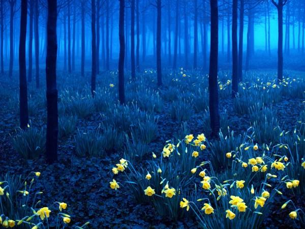 selva negra alemania