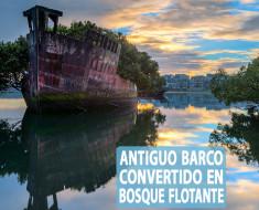 Antiguo barco convertido en bosque flotante