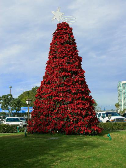 La flor de Nochebuena, historia de un símbolo de la Navidad