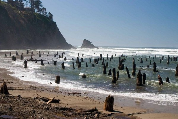 bosque fantasma neskowin oregon