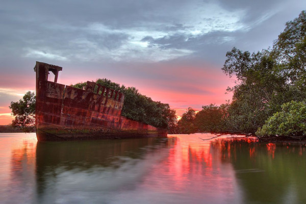 bosque flotante bahia de homebush en sydney