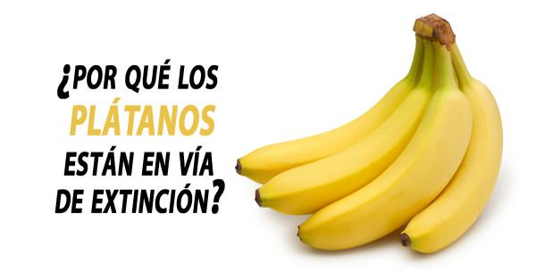 ¿Por qué los plátanos están en vía de extinción?