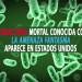 """Superbacteria mortal conocida como """"la amenaza fantasma"""" aparece en Estados Unidos"""