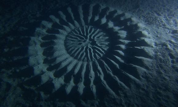 circulos en la arena bajo el agua