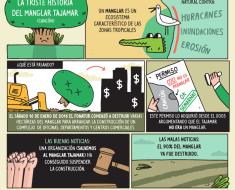 historia paso a paso manglar tajamar