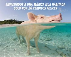 playa de los cerdos bahamas
