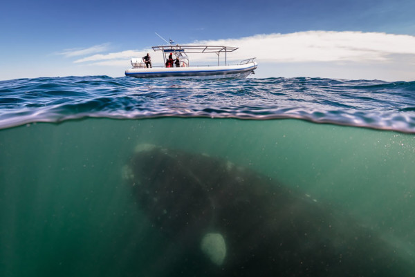 fotos de ballenas