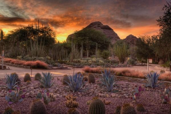 Jardín Botánico en el desierto, Arizona, EE.UU.