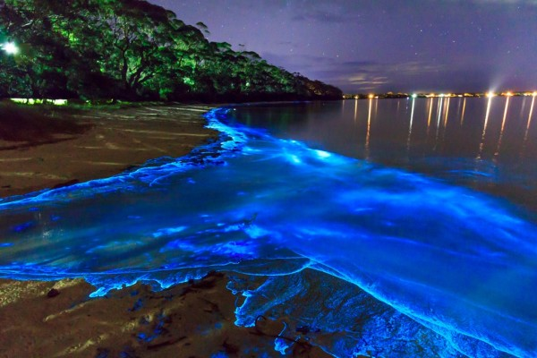 La Laguna de Manialtepec Fluorescente de Oaxaca, México