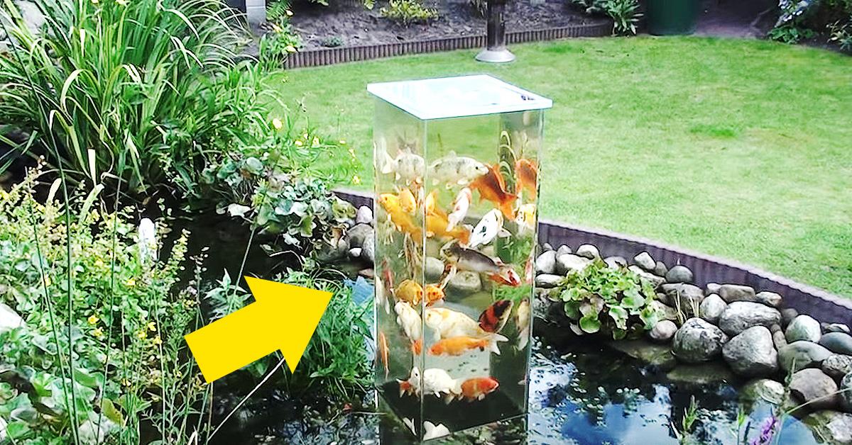 Dio la vuelta a este tanque de cristal y mira lo que for Estanque para patos y peces
