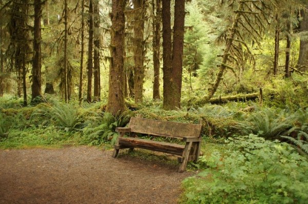 bosque de musgo washington