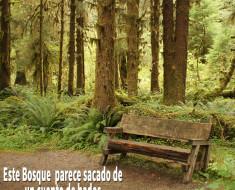 Hall of Mosses: Este bosque parece sacado de un cuento de hadas