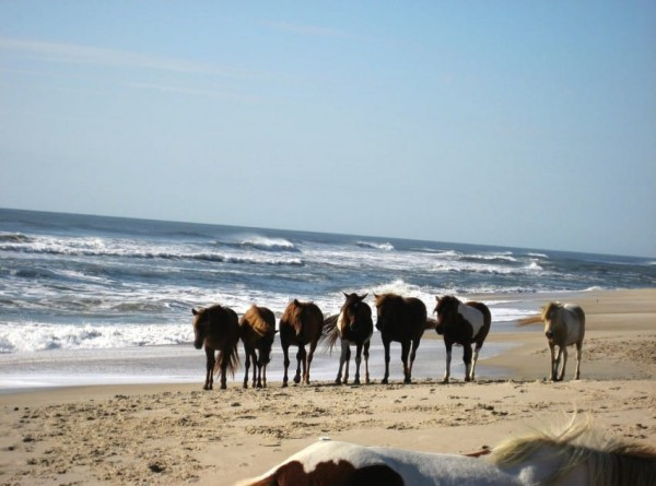 caballo salvajes islas