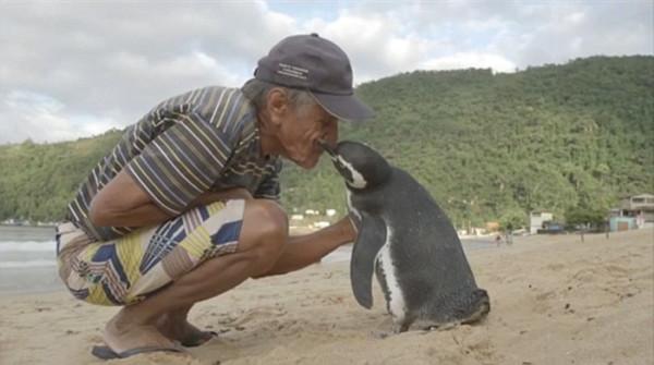 pingino regresa 8000 kilometros visitar salvador