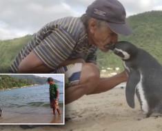 pinguino visita hombre