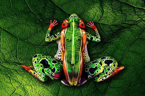 rana pintada varias personas