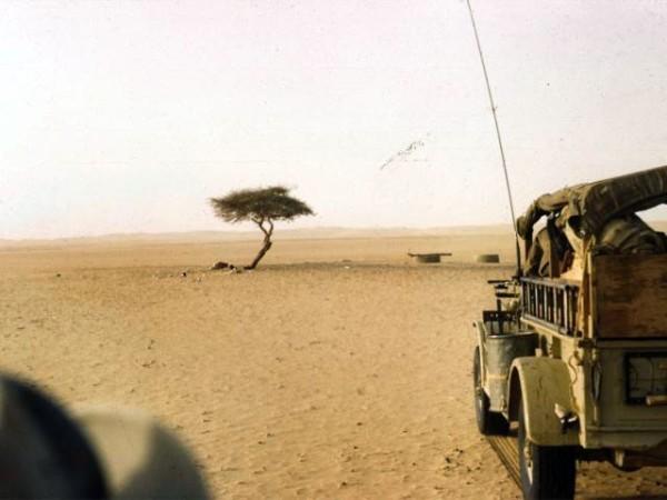 arbol de tenere sahara niger