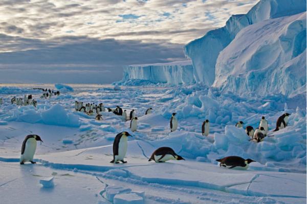 El Ártico y la Antártida
