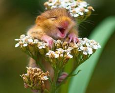 fotos graciosas de animales riendose