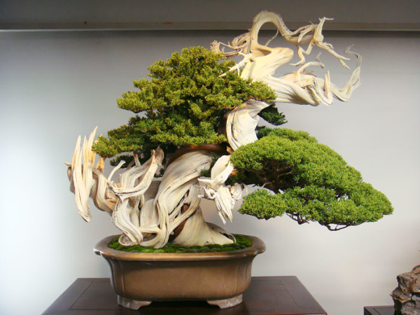 fotos arboles bonsai