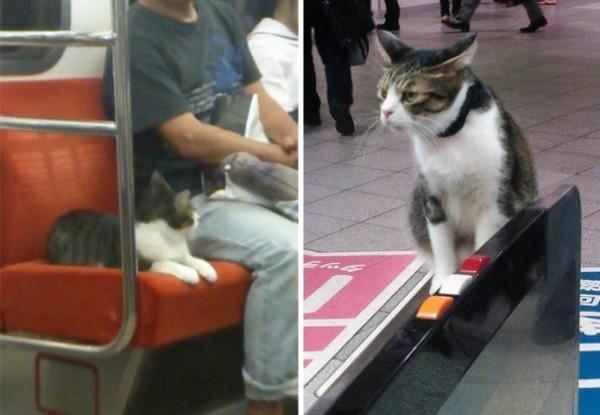 gato viaja solo metro japon