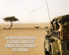 La triste historia del solitario árbol de Tenere en el desierto del Sahara