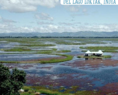 Las islas flotantes del Lago Loktak, India