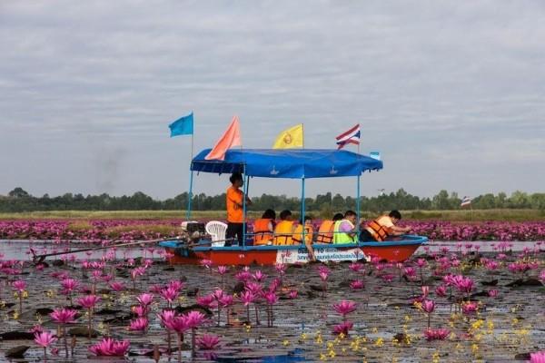 lago loto rojo kumphawapi tailandia