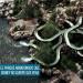 River Country, el tenebroso parque acuático abandonado de Disney