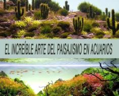 El increíble arte del paisajismo en acuarios
