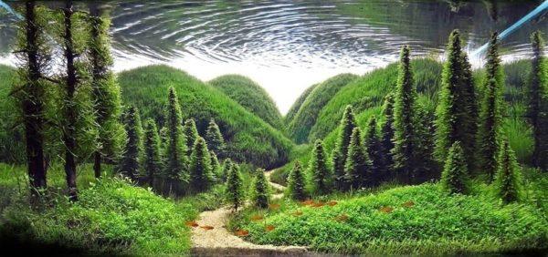 paisajismo acuatico