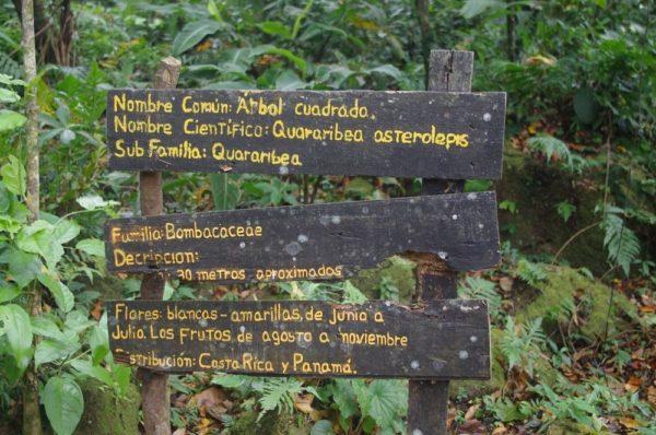 los arboles cuadrados del valle de anton panama
