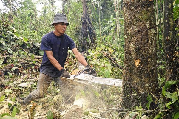 Noruega es el primer país del mundo en prohibir la tala de árboles