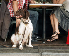 10 restaurantes de la CDMX pet-friendly