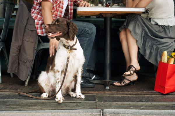 10 restaurantes de la CDMX pet-friendly