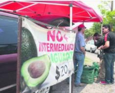 Este agricultor evitó lo intermediarios y vende el kilo de aguacate a 20 pesos