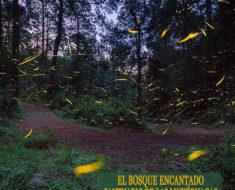 bosque encantando santuario de las luciernagas en nanacamilpa mexico